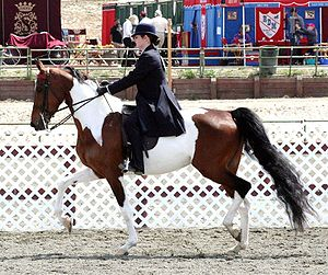 A horse with brown and white spots being ridden by a woman in a dark suit at a horse show