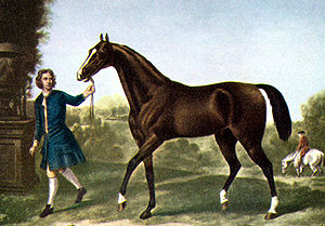 Eighteenth-century painting of a dark brown horse being led by a man in blue clothes. The horse has a thin neck, tail carried high, and a small head.