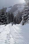 Cross country skiers on a snow covered path between trees