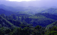 Hills covered with dense blue green tropical forests
