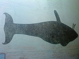 Killer whale silhouette, with two projections above shown above the blowhole.
