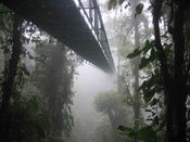 that a cloud forest is a tropical moist broadleaf forest with a persistent cloud cover?