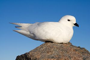Photo of a white bird sitting on a rock.