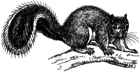 drawing of squirrel facing right on branch