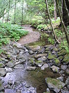 Stream in the redwoods.jpg