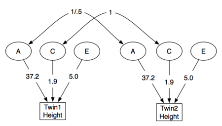 Twin Study Structural ACE model.png